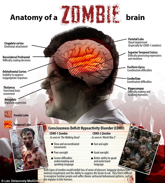 zombie-anatomy-brain
